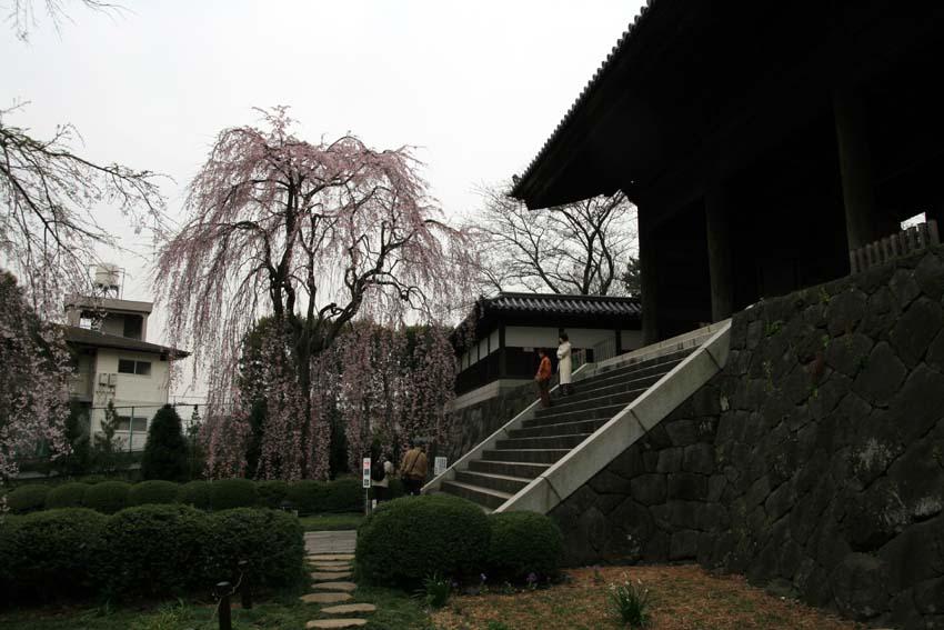2007東郷寺001.jpg