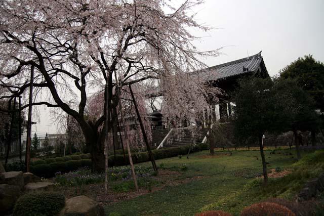 2007東郷寺005.jpg
