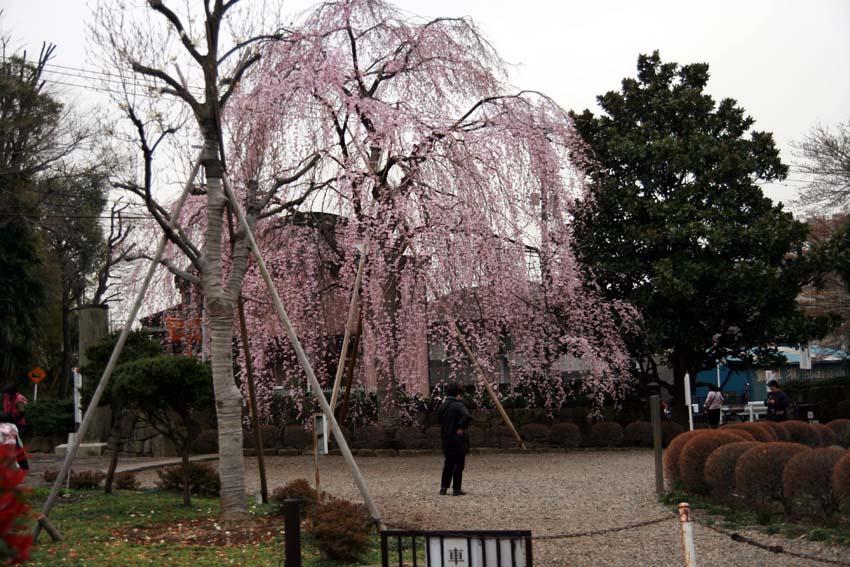 2007東郷寺006.jpg